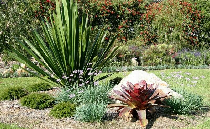Australian Native Garden Garden Pinterest Native Gardens