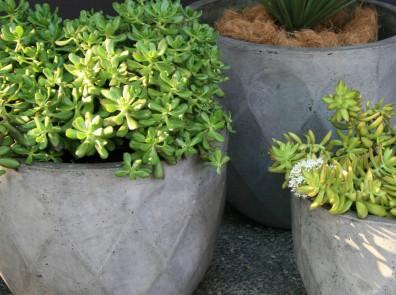 GardenExpressions DAIA_DG_L M S (3)